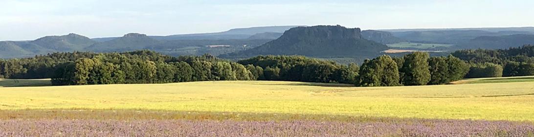 Blick zu Lilienstein und Königstein