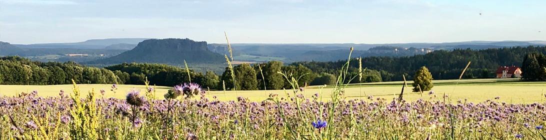 Blick zum Lilienstein von Rathewalde